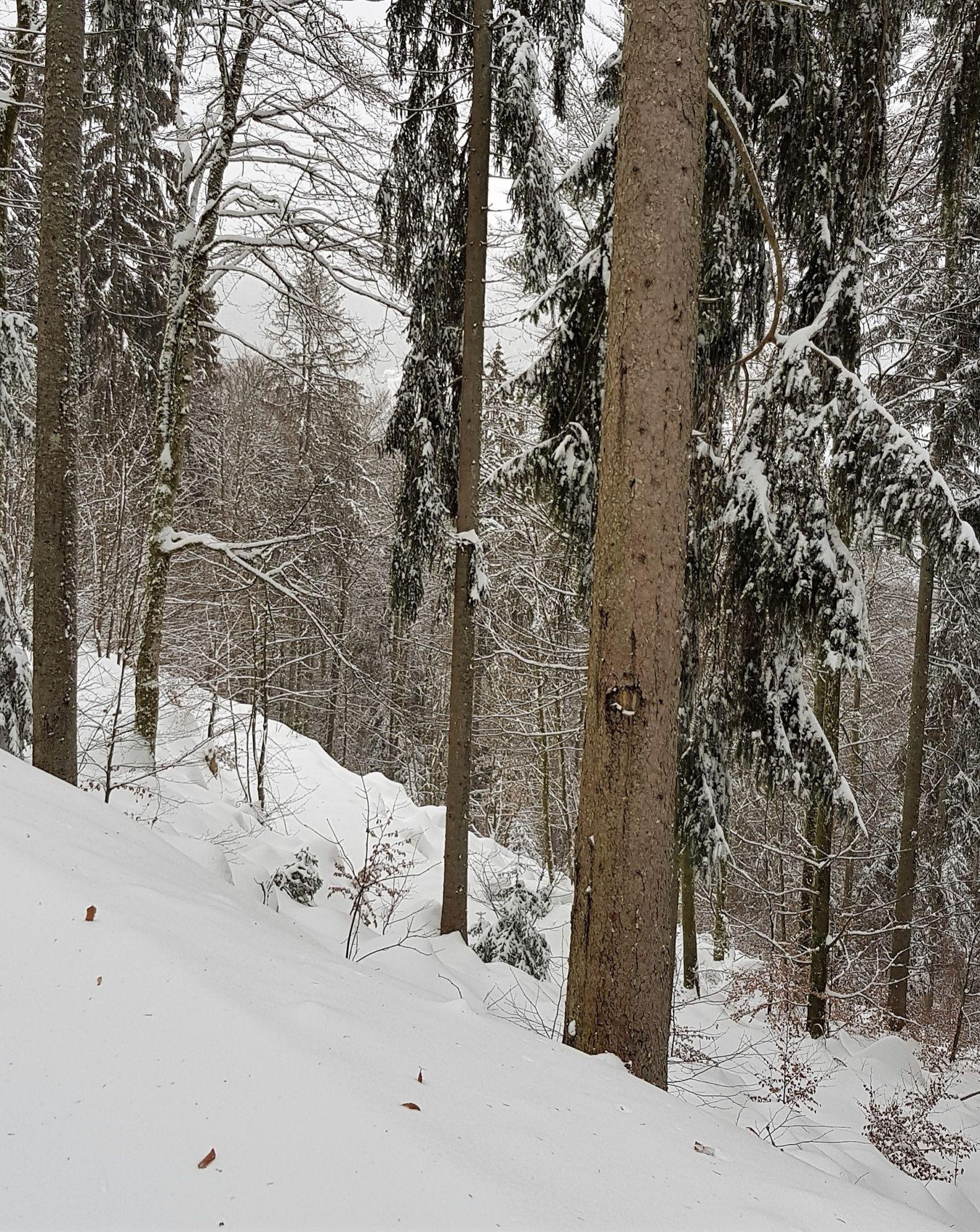 Skilanglauf 20